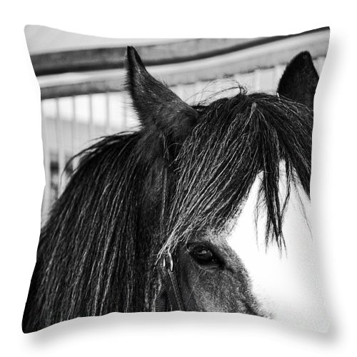 Horse Throw Pillow featuring the photograph Best Friend by Traci Cottingham