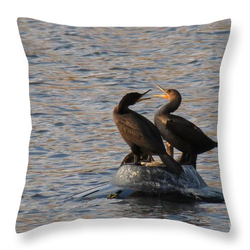 Comorant Throw Pillow featuring the photograph Bickering by Rrrose Pix