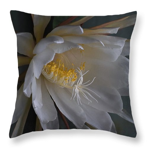Nature Throw Pillow featuring the photograph Big Night Out by Susan Capuano
