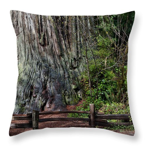 Redwoods Throw Pillow featuring the photograph Big Tree by Greg Nyquist
