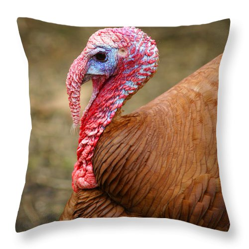 Birds Throw Pillow featuring the photograph Big Turkey by Randy Harris