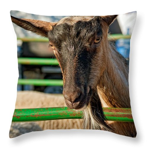 Petting Zoo Throw Pillow featuring the photograph Billy The Ham by Steve Harrington