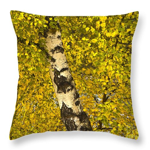 Tree Throw Pillow featuring the photograph Birch Forest In Finland by Heiko Koehrer-Wagner