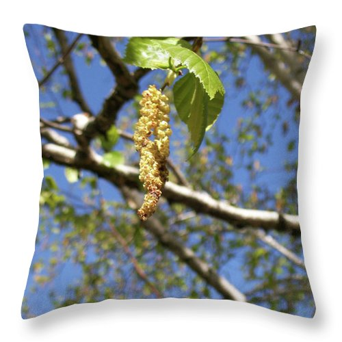 Tree Throw Pillow featuring the photograph Birch Tree Seed Pod by Corinne Elizabeth Cowherd