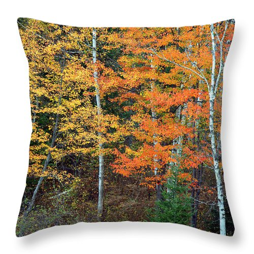 Photography Throw Pillow featuring the photograph Birch Trees And More by Jale Fancey