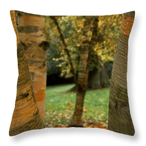 Tree Throw Pillow featuring the photograph Birches In Autumn by David Resnikoff