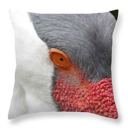 Throw Pillow featuring the photograph Bird Eye by Craig Vargas