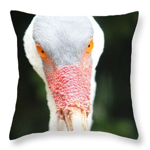 Bird Throw Pillow featuring the photograph Bird Eyes by Craig Vargas