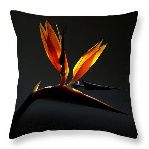 Bird Throw Pillow featuring the photograph Bird Of Paradise 3 by Sherry Fain