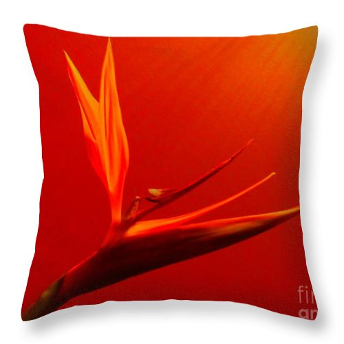 Flower Throw Pillow featuring the photograph Bird Of Paradise by Susan Carella
