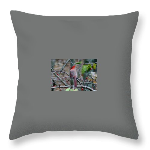 Birds And Berries Throw Pillow featuring the photograph Birds And Berries by Barbara S Nickerson