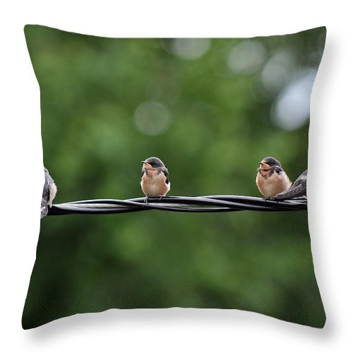 Young Throw Pillow featuring the photograph Birds by Dragan Kudjerski