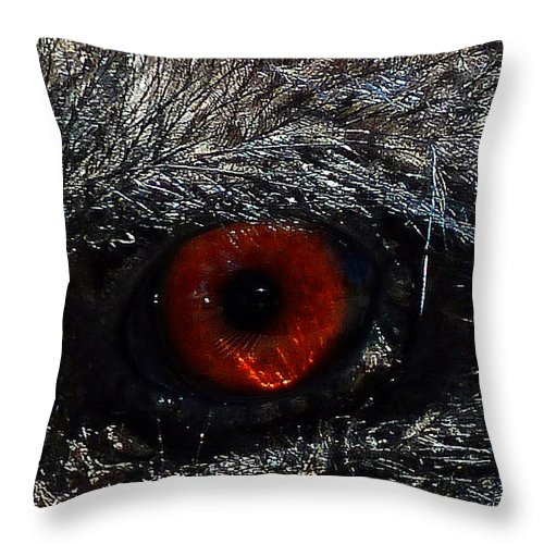 Bird's Eye Throw Pillow featuring the photograph Bird's Eye by Methune Hively