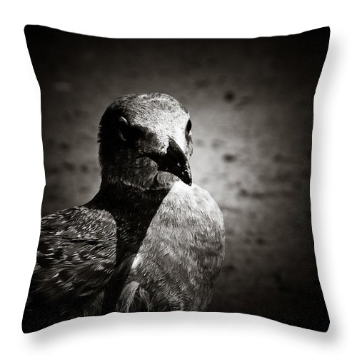 Seagull Throw Pillow featuring the photograph Bird's Eye View by Jessica Brawley