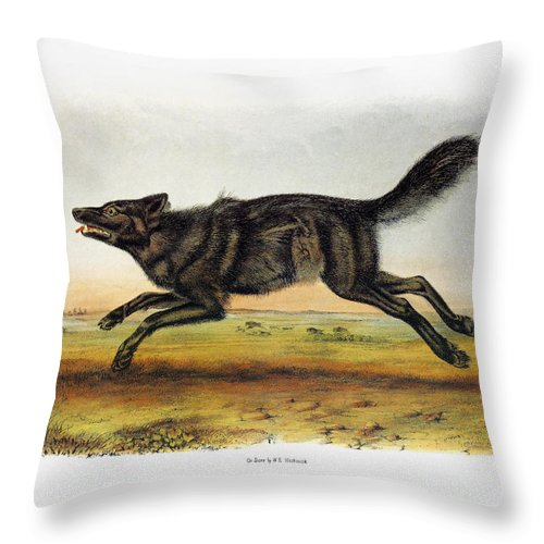 1846 Throw Pillow featuring the photograph Black American Wolf by Granger