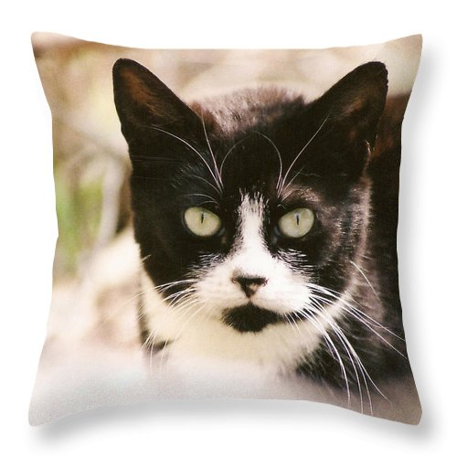 Tuxedo Cat Throw Pillow featuring the photograph Black And White Feral Cat by Chriss Pagani
