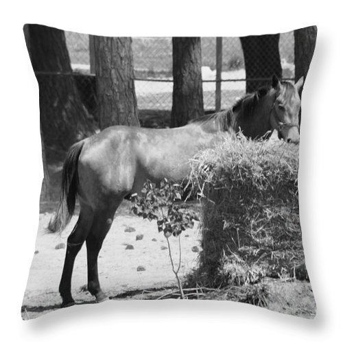 Horse Throw Pillow featuring the photograph Black And White Hay Horse by Michelle Powell
