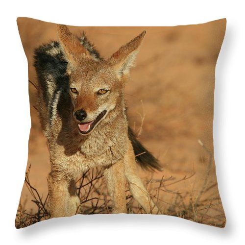 Africa Throw Pillow featuring the photograph Black-backed Jackal by Bruce J Robinson