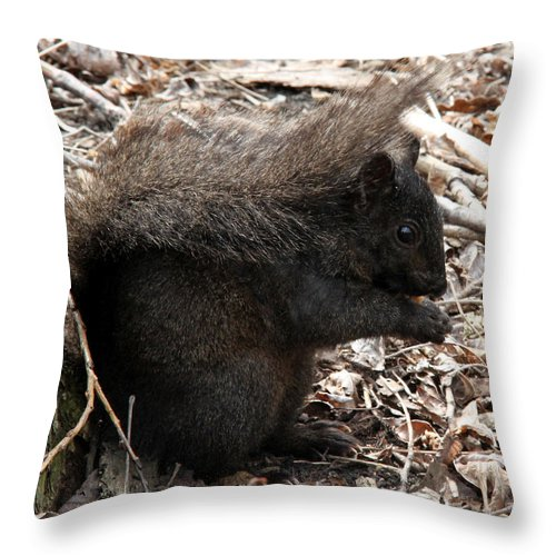 Black Throw Pillow featuring the photograph Black Beauty by Doris Potter