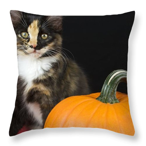 Adorable Throw Pillow featuring the photograph Black Calico Kitten With Pumpkin by Gregory Dean