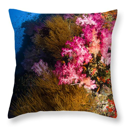 Fish Throw Pillow featuring the photograph Black Coral And Soft Coral Seascape by Todd Winner