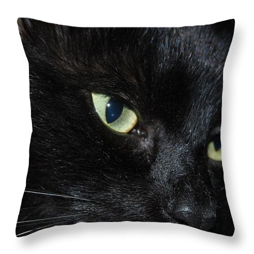 Cat Throw Pillow featuring the photograph Black Night by Michael L Gentile