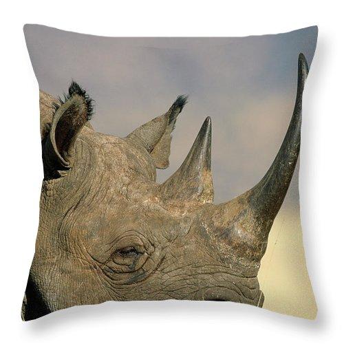 Fn Throw Pillow featuring the photograph Black Rhinoceros Diceros Bicornis Close by Winfried Wisniewski