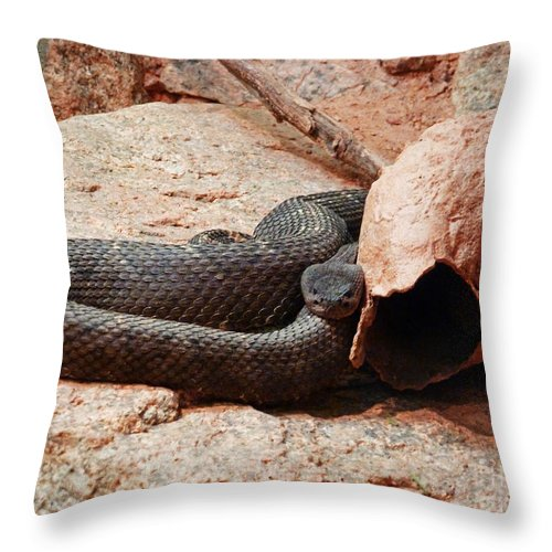 Black Snake Throw Pillow featuring the photograph Black Snake by Methune Hively