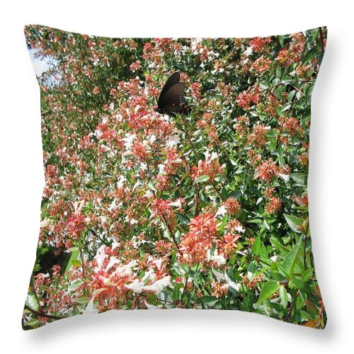 Butterfly Throw Pillow featuring the photograph Black With Orange Dots Butterfly by April Patterson