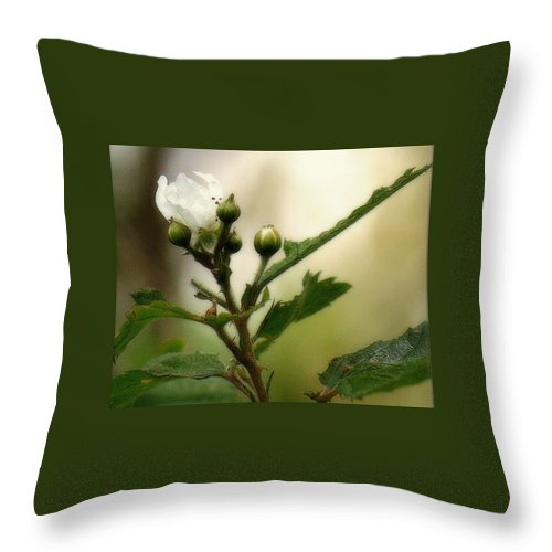 Blackberry Throw Pillow featuring the photograph Blackberry Vine Flower by Mel Hensley
