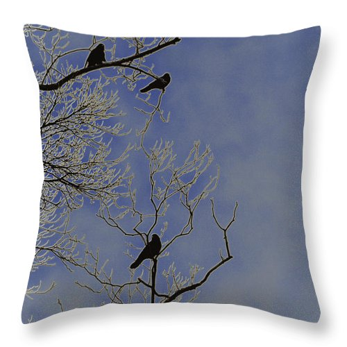 Blackbird Throw Pillow featuring the photograph Blackbirds by Bill Cannon