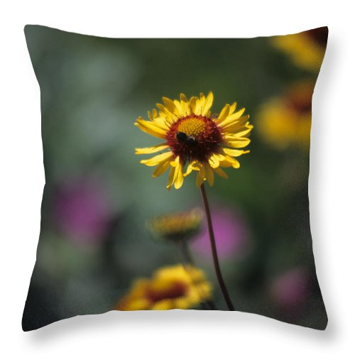 Blanket Flower Throw Pillow featuring the photograph Blanket Flower by One Rude Dawg Orcutt