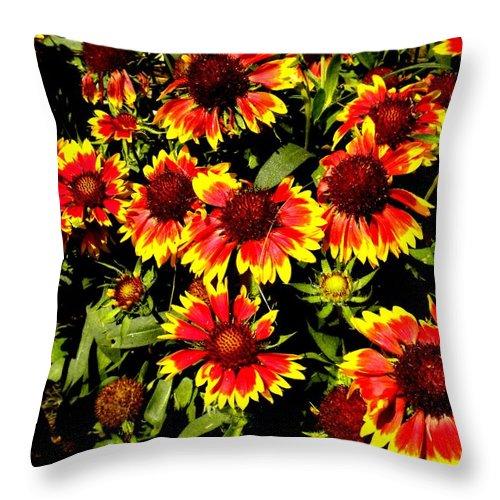 Gaillardia Throw Pillow featuring the painting Blanket Flowers by Renate Nadi Wesley
