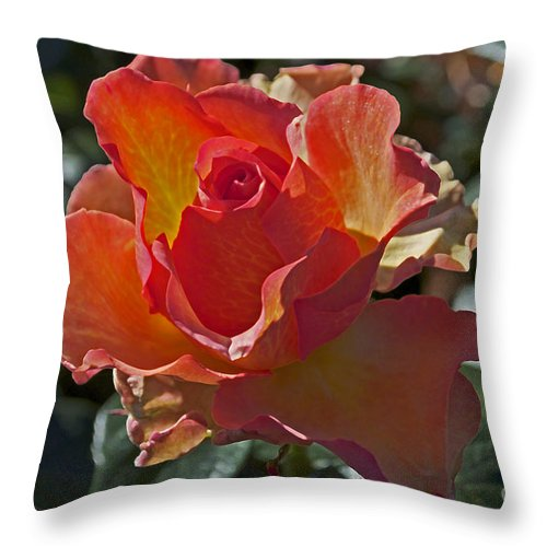 Rose Throw Pillow featuring the photograph Blessings by Gwyn Newcombe