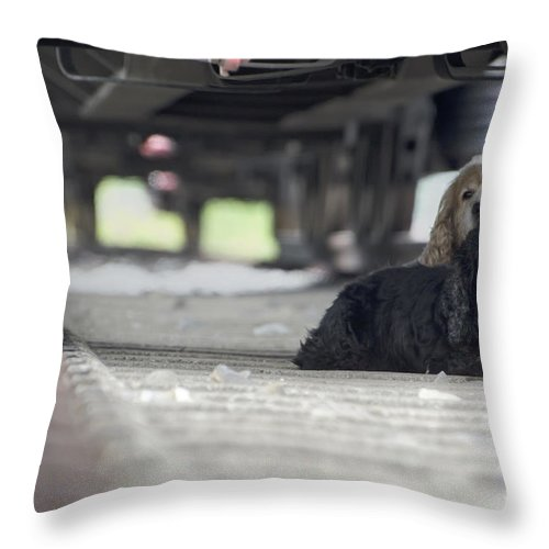 Dog Throw Pillow featuring the photograph Blonde And Black Dogs by Mats Silvan