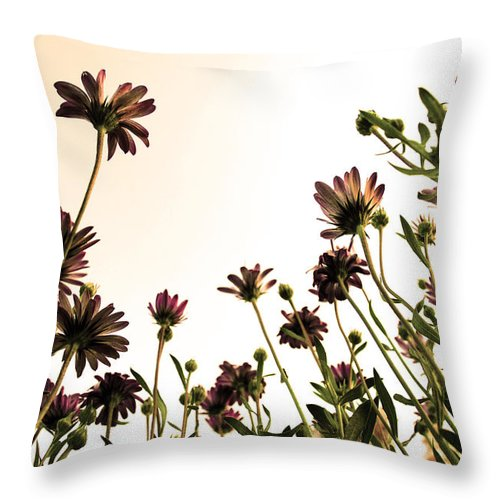 Flowers Throw Pillow featuring the photograph Blooming Above 2 by Sumit Mehndiratta