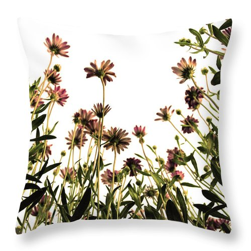 Flowers Throw Pillow featuring the photograph Blooming Above by Sumit Mehndiratta