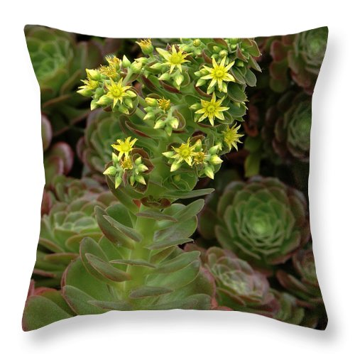 Blooming Throw Pillow featuring the photograph Blooming Succulents by Mike Nellums