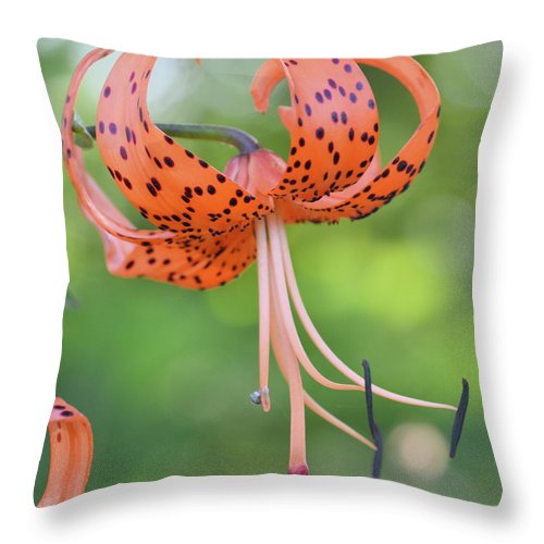 Tiger Throw Pillow featuring the photograph Blooming Tiger by JD Grimes