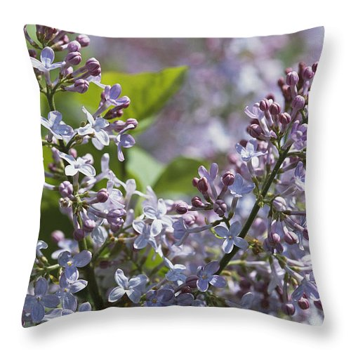 North America Throw Pillow featuring the photograph Blossoming Hyacinthiflora Lilacs by Darlyne A. Murawski
