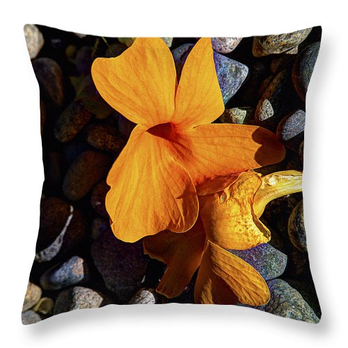 Blossom Throw Pillow featuring the photograph Blossoms Final Performance by Joe Schofield
