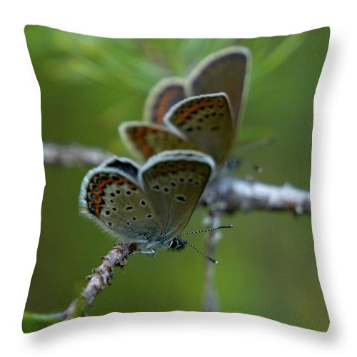 Sinisiipi Throw Pillow featuring the photograph Blue 2 Together by Jouko Lehto