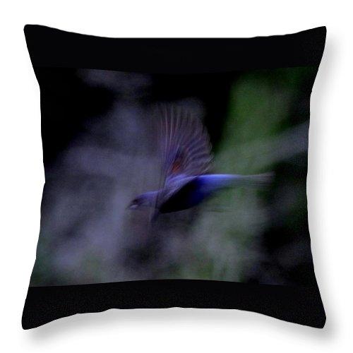 Blue Grosbeak Throw Pillow featuring the photograph Blue Blur by Travis Truelove