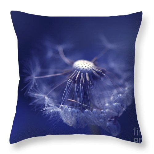 Dandelion Throw Pillow featuring the photograph Blue Dandy by Sharon Talson