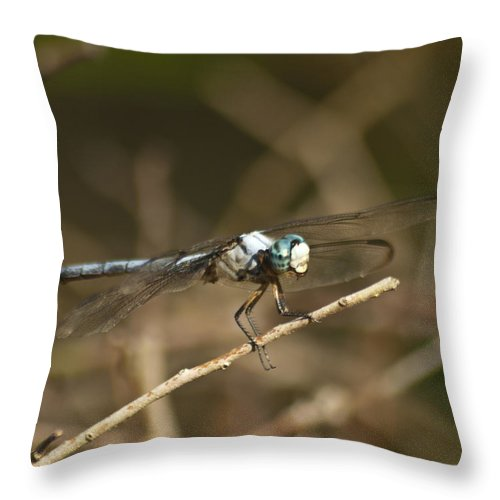Animal Throw Pillow featuring the photograph Blue Dasher 8769 by Michael Peychich