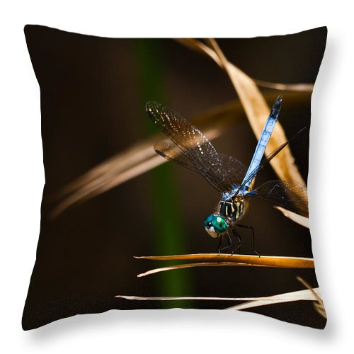 Blue Dasher Throw Pillow featuring the photograph Blue Dasher Dragonfly by Ed Gleichman