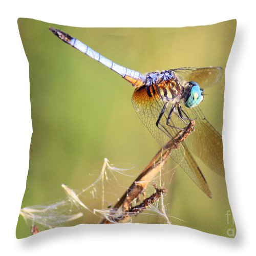 Dragonfly Throw Pillow featuring the photograph Blue Dasher On Twig by Carol Groenen