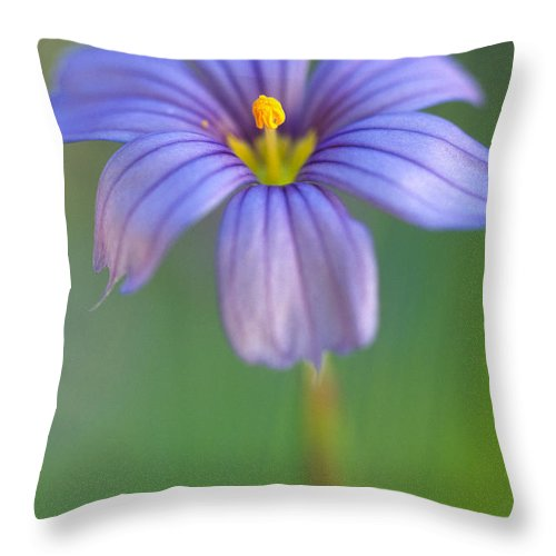Flowers Throw Pillow featuring the photograph Blue Eyed Grass 2 by Kathy Yates