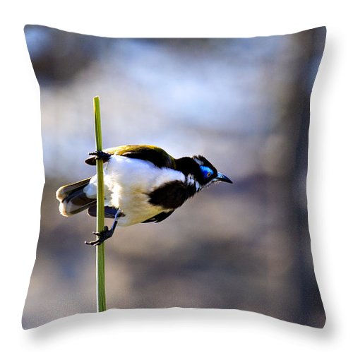 Blue Faced Honey Eater Throw Pillow featuring the photograph Blue Faced Honey Eater V3 by Douglas Barnard