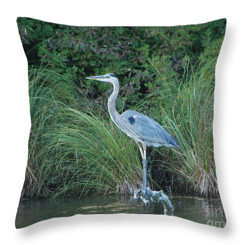 Blue Heron Throw Pillow featuring the photograph Blue Heron by Grace Grogan